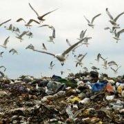 Uccelli marini e plastica