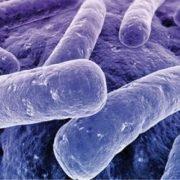 batteri enzimatici per bonifiche
