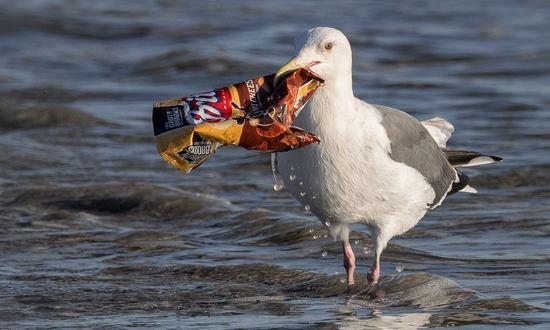 giornata mondiale dell'ambiente lotta alla plastica 3